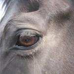 馬の目の写真